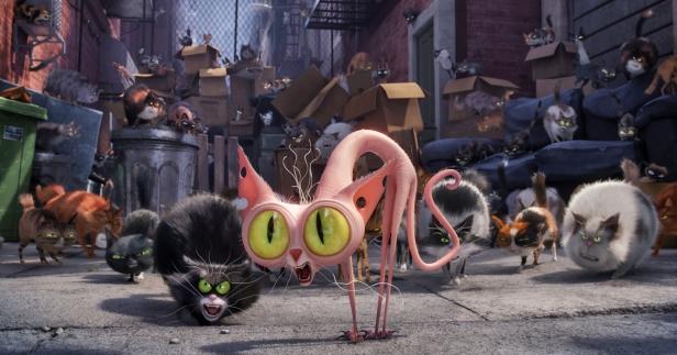 'Who ya calling a scaredy-cat?'
